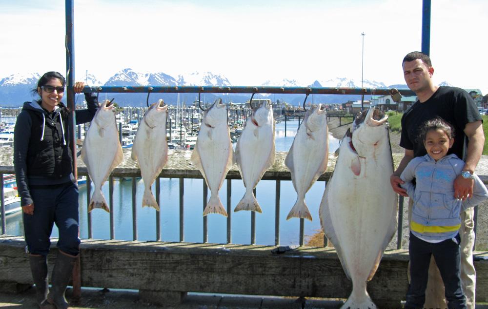 Wild Halibut | Alaska Salmon Photos And Kenai Rainbow Pictures Kenai Wild Fishing